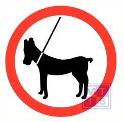 Honden aan de lijn pp 300mm